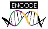 ENCODE Project at UCSC